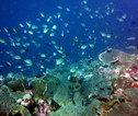 de Malediven - onderwaterwereld