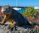 Rondreis Galapagos