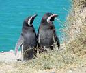 Rondreis Patagonië met Paaseiland