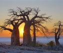 Rondreis Namibië, Botswana, Zuid-Afrika