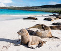 Wildlife Galapagos