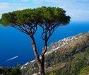 Uitzicht met boom