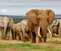Addo Elephant Nationaal Park