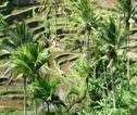 Rondreis Bali en Sumba