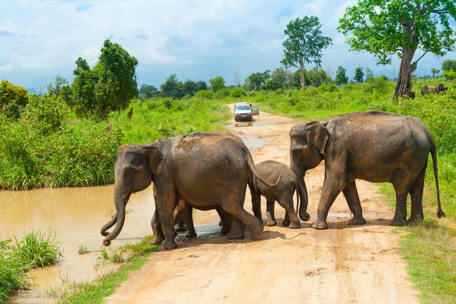 100 gratis contacten Vrijgezellen in Sri Lanka