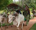 Cycle Tours Sri lanka