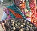 Festivalreis Zuid-India