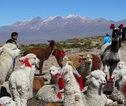 Rondreis Peru lama