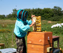 Honing Rusland