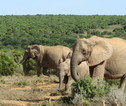 Addo Elephant Nationaal Park
