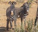 Familiereis Tanzania