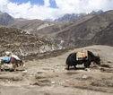 Rondreis Nepal Yak Gokyo Ri