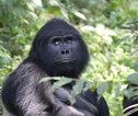 Rondreis Uganda